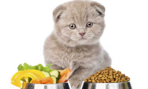 Лучший сухой корм для кошек России: исследование Роскачества