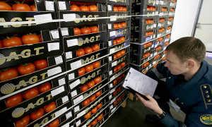 Сколько фруктов можно ввозить в Россию через границу