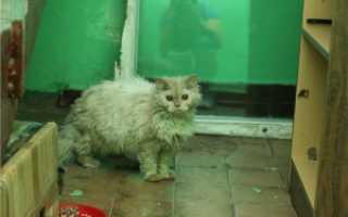 Что делать с бездомными котами в подъезде: отвечает эксперт