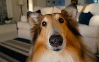 Куда жаловаться на лай соседской собаки: 3 варианта подачи жалобы на шумных соседей